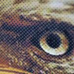 Forever RIP Software eye print