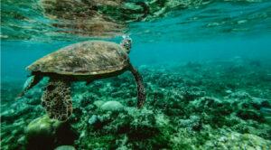 Underwater photo of turtle